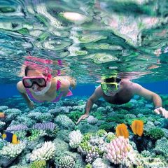 5 best locations for snorkeling and diving in Costa Rica