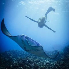 Experience snorkeling while traveling Maldives