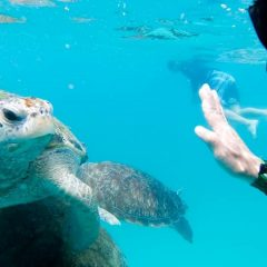 Snorkeling and exciting activities in paradise Redang