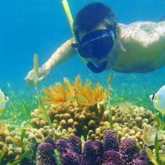 Best Maldives Resorts For Snorkeling