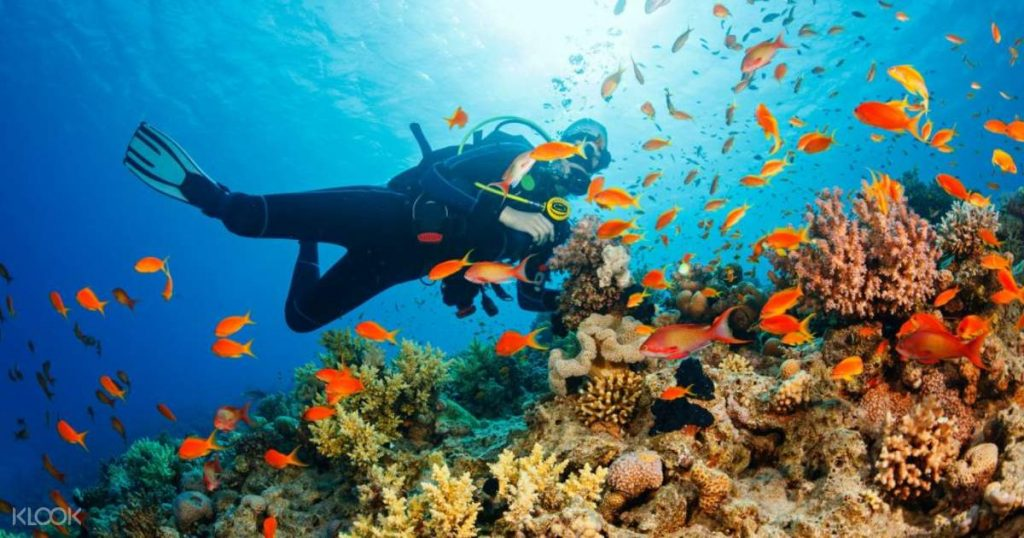 Differences Between Snorkeling And Scuba Diving